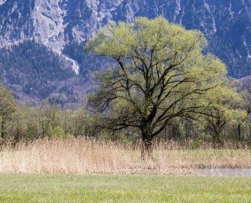 Ein Baum inmitten einer Wiese.