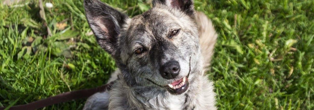 Tag des Lächelns Hund