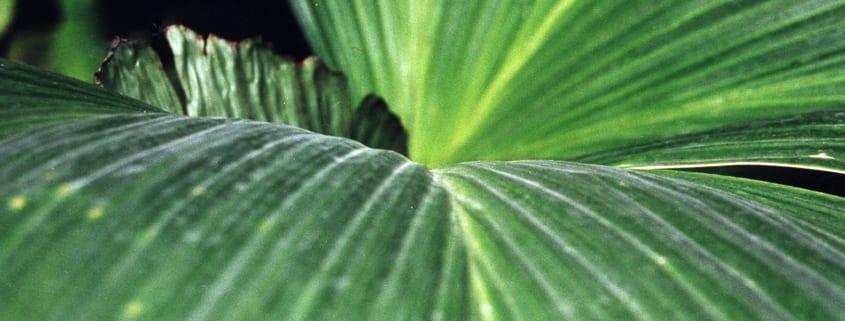 Makroaufnahme von einem grünen Blatt